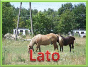 Zdjęcie z dwoma koniami na łące oraz napis Lato