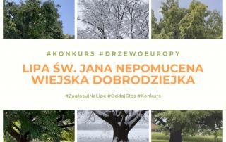 Konkurs Europejskie Drzewo Roku