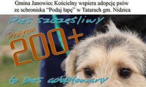 adopcja psów