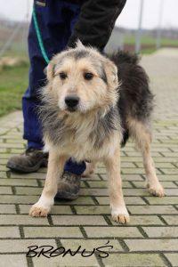 adopcja psa bronuś