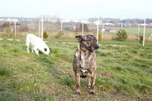 adopcja psa dusia