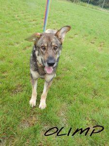 adopcja psa olimp