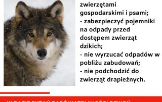 informacje na temat wilków